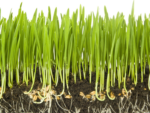 Kinds Of Grass