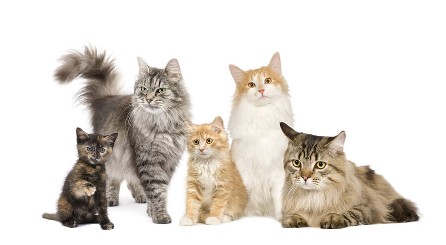 Kinds Of Kittens