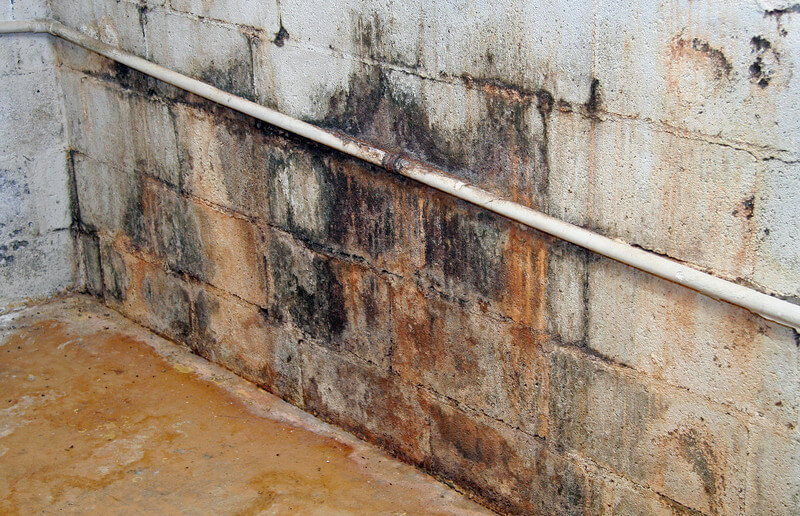 Kinds Of Mold