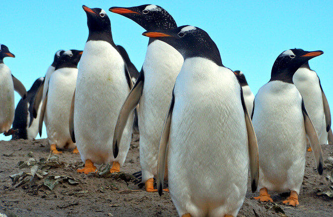 Kinds Of Penguins