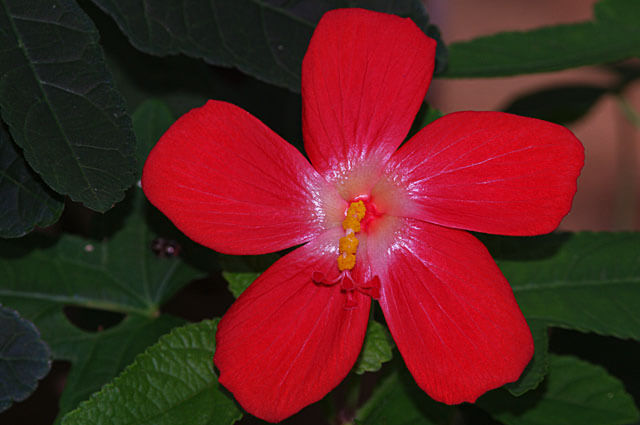 Kinds Of Red Flowers