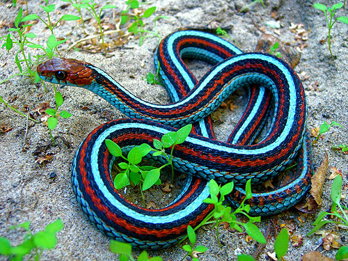 Kinds Of Snakes - Answering All Kinds Of Questions ...