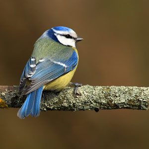 kinds-of-birds-for-pets-img