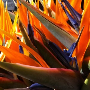 Kinds Of Birds Of Paradise