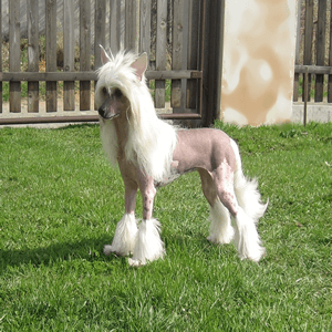 Kinds Of Dogs That Don't Shed