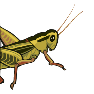 Kinds Of Grasshoppers