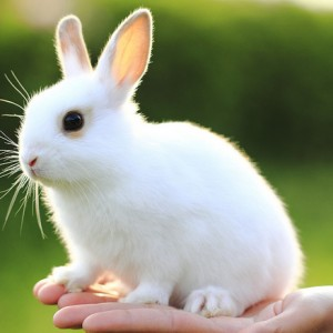 Kinds Of Rabbits For Pets