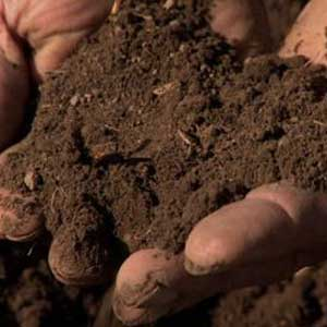Kinds Of Soil In India